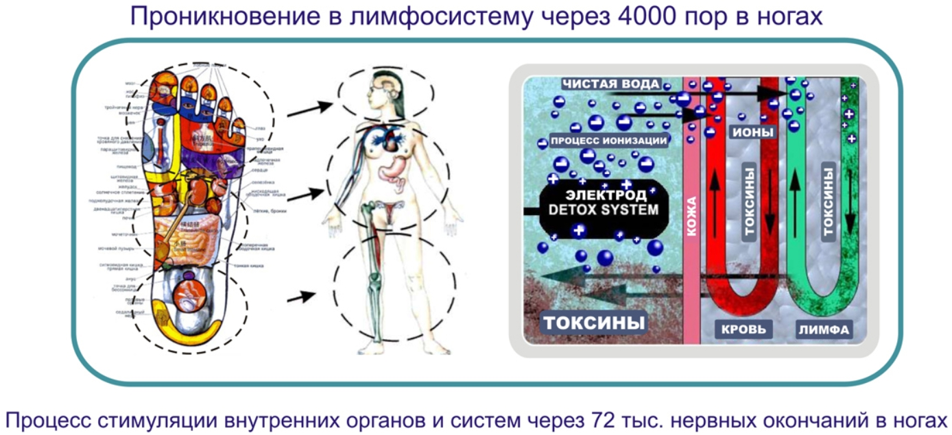 очистка организма от паразитов токсинов